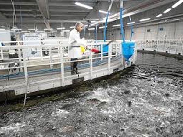 Krügers RAS2020-anlæg kan åbne store perspektiver for bæredygtig fiskeopdræt på land, viser erfaringer fra Schweiz.
